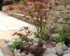 Japanese maple in pebble bed